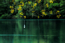 Spring Reflections On A Pond With Fishing Tackle