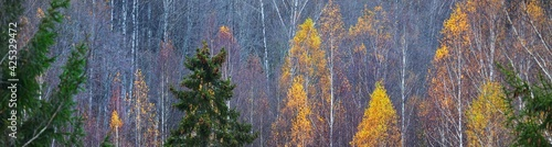 Fotografie, Obraz Panoramic view of birch trees and plants covered with hoarfrost