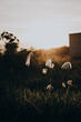 canvas print picture - flock of sheep