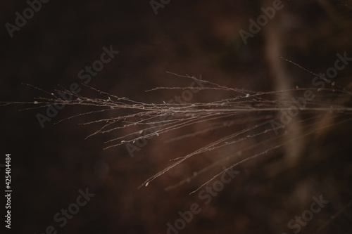 Canvas spider web with dew drops