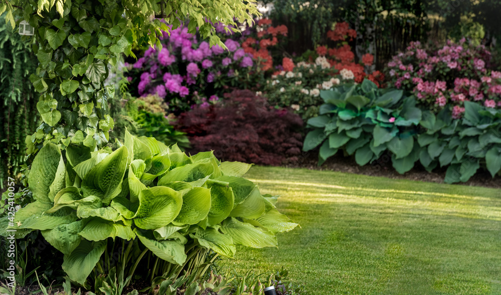 Fototapeta  natura funkia biały zielony ogród liść ozdobnych wzór duża liść roślina ozdobny liści srokaty tekstura lato flora koło bujny kropla bylina piękny blisko w górę uroda kolor tło krajobrazowe sezon różo