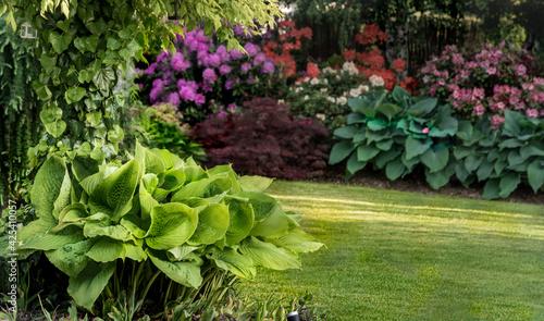 Fototapeta  natura funkia biały zielony ogród liść ozdobnych wzór duża liść roślina ozdobny liści srokaty tekstura lato flora koło bujny kropla bylina piękny blisko w górę uroda kolor tło krajobrazowe sezon różo obraz