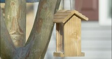 A Small Avian Bird Species, Common Name Tufted Titmouse Lands On A Feeder To Collect Seed In Its Beak And Flies Away To Nearby Tree Branches To Crack Open And Each The Fatty High Energy Nut Inside