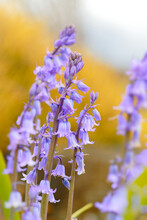 Pink-purple-blue Flowers