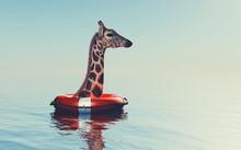 Giraffe Belt