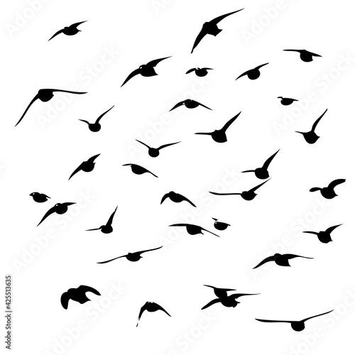 Tela A flock of flying birds. Vector illustration
