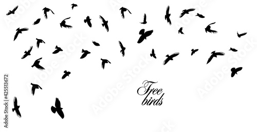 Photo A flock of flying birds. Vector illustration