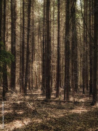 The Wambachtal forest in Muelheim an der Ruhr, North Rhine-Westphalia, Germany