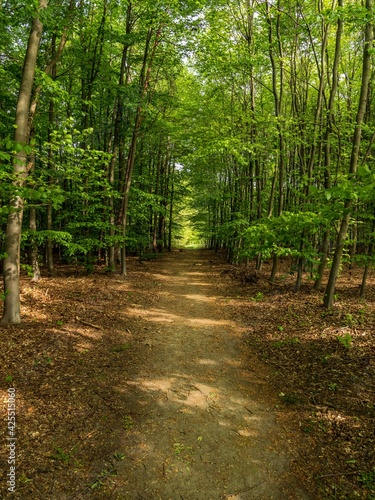 A footpath through the Mintarder Berg forest, Ratingen-Hoesel, North Rhine-Westphalia, Germany