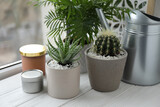 Beautiful Aloe, Cactus, Chamaedorea in pots with watering can and decor on white wooden windowsill, closeup. Different house plants