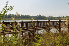 Park On The Shore Of An Artificial Lake In Rishon Le Zion. View Of The Wooden Bridge Over Lake Israel. Autumn