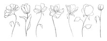 Set Of Botanical Line Art Abstract Flowers. Hand Drawn Sketch Floral Leaves Isolated On White Background. Vector Illustration