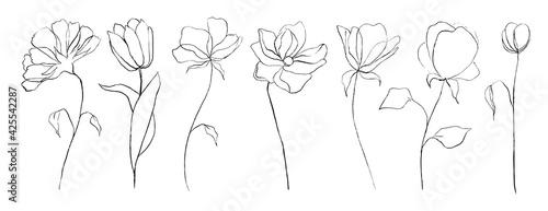 Photo Set of botanical line art abstract flowers