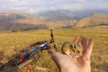 Field Mouse Eating Hand In Hand With A Mountain Background And A Bicycle.