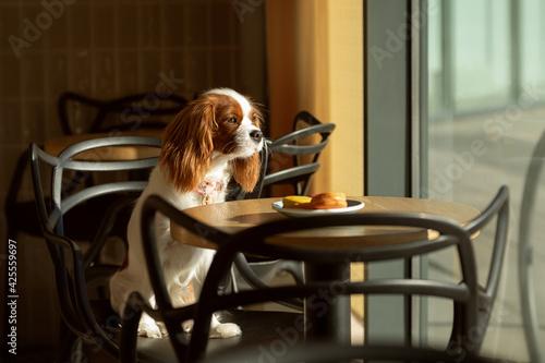 Billede på lærred dog with a cup of coffee