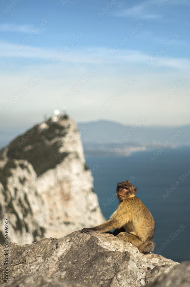 Fototapeta skała gibraltarska