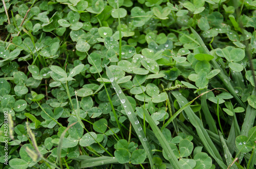 Photo hierva fresca donde se acumulan las gotas de la lluvia