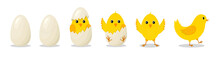 Chick In Egg. Chick Hatch From Cracked Egg. Cute Chicken With Character. Yellow Easter Bird For Baby. Newborn Chicken With Step Of Progress. Cartoon Farm With Happy And Funny Animal. Vector