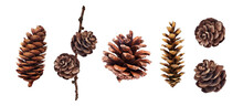 Set Of Pine Cones Isolated On White Background. Hand Painted Watercolor. Botanical Hand Drawn Illustration. Cones Of Coniferous Trees, Forest Elements