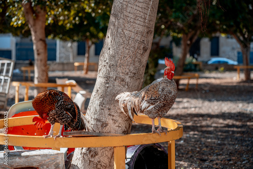 Canvas Print two roosters with red combs on a metal street fence