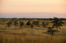 Coucher De Soleil, Masai, Parc National, Masai Mara, Kenya