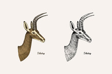 Horn And Antlers Animals. Impala, Gazelle And Greater Kudu, Fallow Deer Reindeer, Axis And Dibatag. Hand Drawn Engraved Sketch