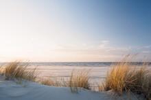 Golden Dune Grass At The Beach