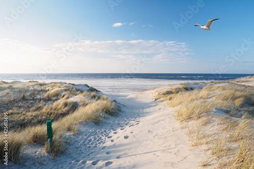 Beach, dunes, sea gull at the north sea