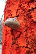 Weiße Pilze Auf Einem Neonorangen Markierten Baum Im Wald. Forstwirtschaftliche Baummarkierungen Zur Kontrolle Des Waldbestandes.