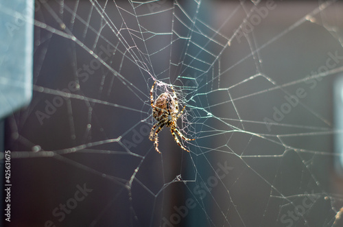 Photo Spinne im netz