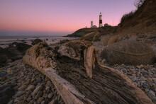 Drift Wood On The Shoreline Of Montauk New York At Sunset