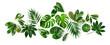 Leinwandbild Motiv Jungle green leaves creative composition.