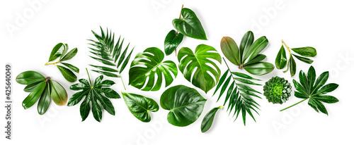 Jungle green leaves creative composition. - fototapety na wymiar