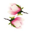 Rozkwitająca magnolia. Ręcznie rysowany kwiat w kolorze bladego różu z gałązką na białym tle.