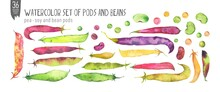 Watercolor Beans Set Isolation On White. Pea, Soya, Bean Pods And Beans Handdrawn Fresh Veggies. Colorfull Bright Summer Set For Design Textile, Wallpapers, Print And Banners.