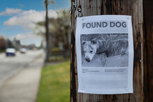 A Poster Tacked To A Telephone Pole For A Dog Found In The Neighborhood