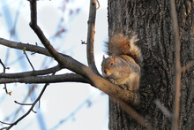 A Squirrel Climbing Or A Tree Branch