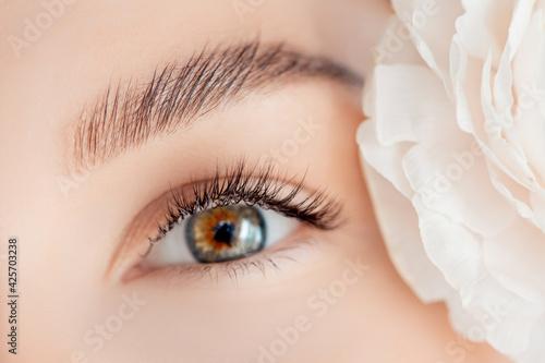 Fototapeta Eyelash extension procedure microblading for green eyes woman in salon
