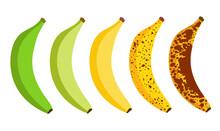 Banana Ripeness Fruit Illustration Green Mature Bad Food. Banana Ripe Vector Icon