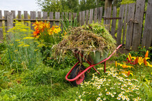 The Garden Cart Is Filled With Cut Grass. Cleaning Of Weeds And Herbs In The Garden.