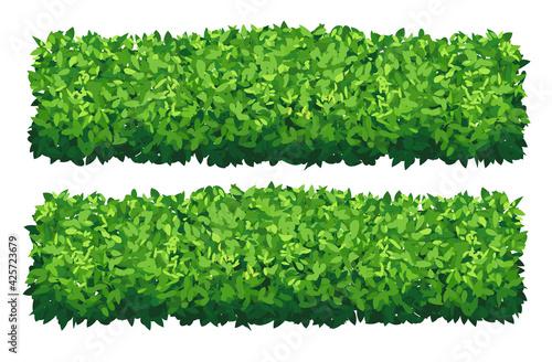 Fotografia, Obraz Vector garden bush isolated shrub hedge