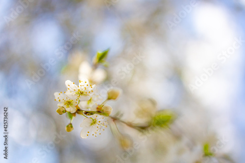 Spring banner, branches of blossoming cherry with bright background. Dream nature outdoor blur. Pink sakura flowers, dreamy romantic spring, landscape panorama. Sun rays, relax floral view
