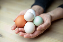 Brown, White And Green Eggs In Hands