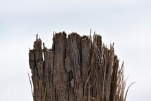 A Frayed Piece Of A Palm Bark.