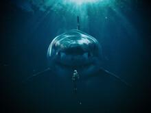 Shark With Men Underwater, Wall Art