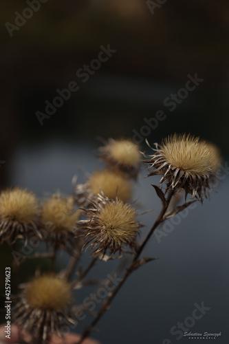 Obraz suchy kwiat - fototapety do salonu