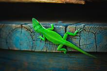 Green Lizard On A Board
