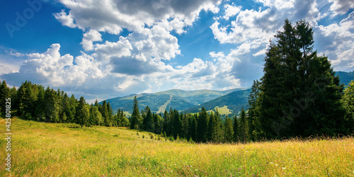 canvas print motiv - Pellinni : forest on the grassy meadow in mountains. beautiful countryside landscape on a sunny day. fluffy clouds on the blue sky above the distant borzhava ridge. summer adventures in carpathians