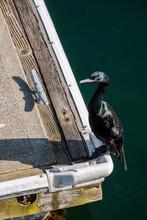 A Cormorant Sits On A Pier