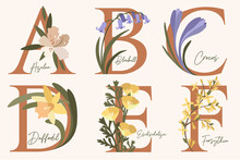 Hand Drawn Floral Alphabet With Spring Flowers.Letters A, B, C, D, E, F With Flowers Azalea, Bluebell,crocus,daffodil,forsythia,eschscholzia